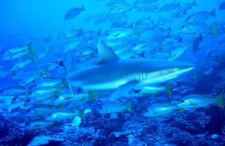 Go Scuba diving with TopDive and see amazing marine life