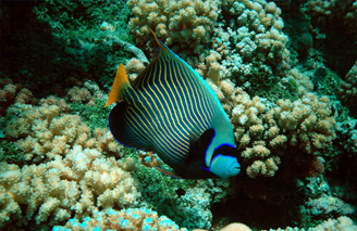 Breathtaking tropical fish.  Image:  Tahiti Tourism